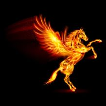 23684531 - fire pegasus rearing up. illustration on black background